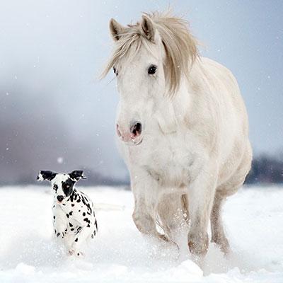 Blade Baloo Sachen für Hunde- und Pferdefreunde